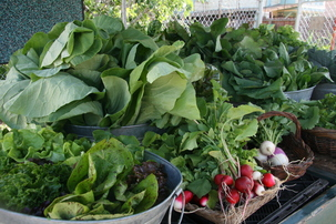 produce at farm stand 2