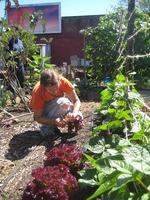 Intern Harvesting